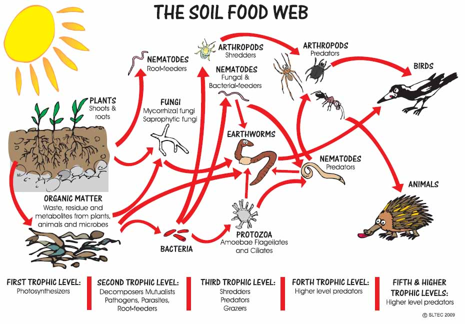 The Soil Food Web for a Healthy Soil