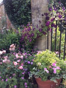 GardenRenovations